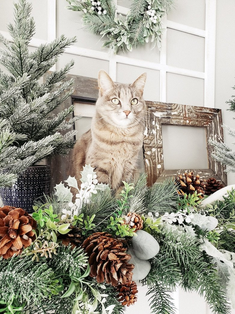 Cat on the mantle
