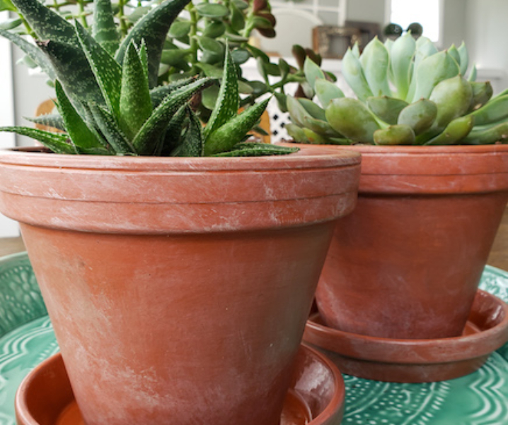 Ageing terracotta pots with paint