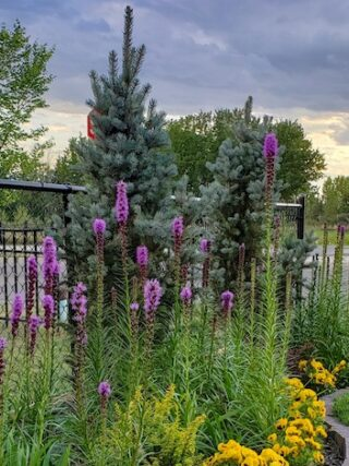 Landscaping and planting a garden from scratch