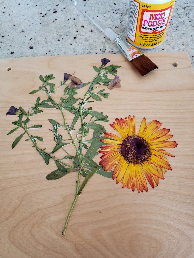pressed flowers on a flower press