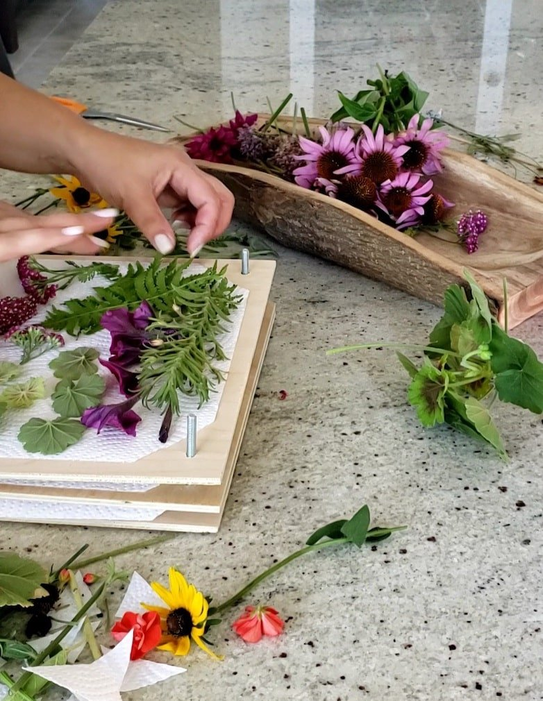 Laying out flowers to press